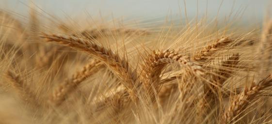 o-joio-e-o-trigo-sera-que-voce-entendeu-direito.jpg
