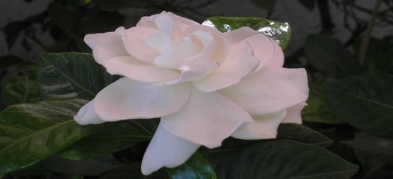 finados-flores-presentes-materializam-planos-espirituais.jpg