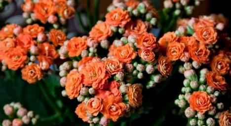 cultivar1.jpg