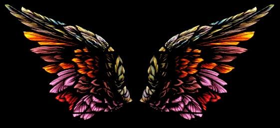 asas-de-anjo.jpg