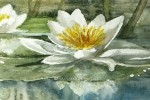 magnified-healing-lotus