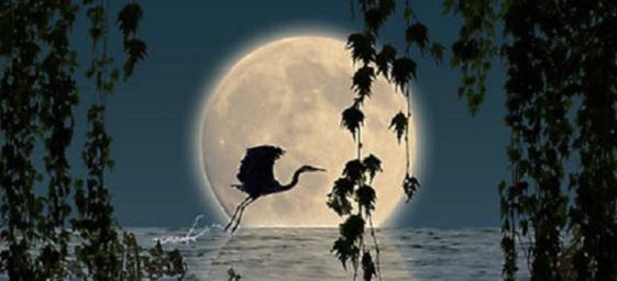 lua-lunar-escorpiao-13.jpg